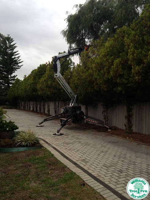 tree pruning by williams tree pro services