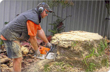 tree stump removal machine